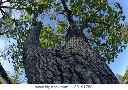 Fisheye view of Tree growing in park
