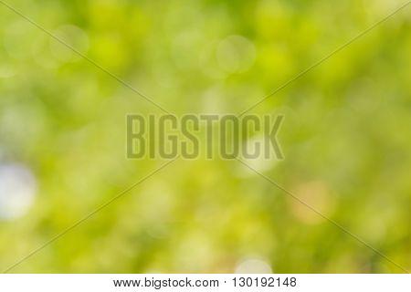 Wonderful Romantic Soft Green Dreamy Tree Bush Bokeh Background