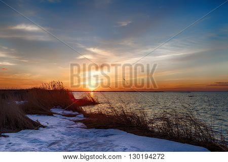Sunrise with warm yellow sea grass at the coastline