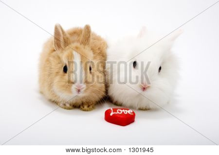 Two Cute Baby Rabbits With Red Hearts, Sign: