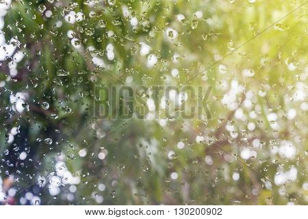 Rain Drop On Window Glass With Bokeh Tree Bush Blurred Background And Warm Sunny
