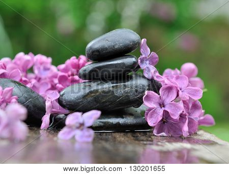 black pebbles among petals of lilac on green background