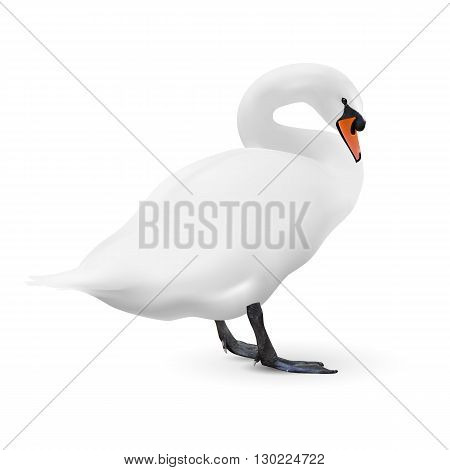 White swan isolated on white background with a shadow vector image