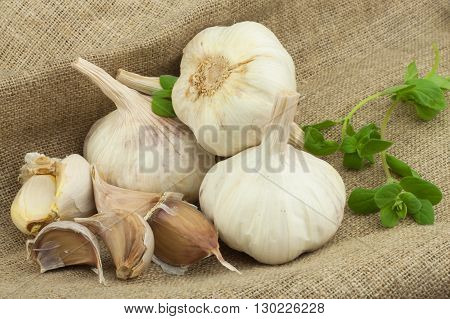 Superfood garlic. Domestic cultivation garlic. Traditional natural cure for blood pressure and flu. Garlic on the kitchen table. garlic bulbs