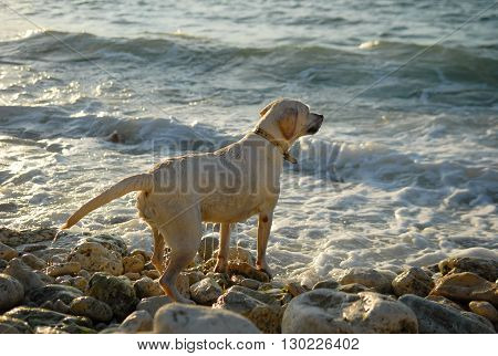 wet dog standing on the beach and looks into the distance
