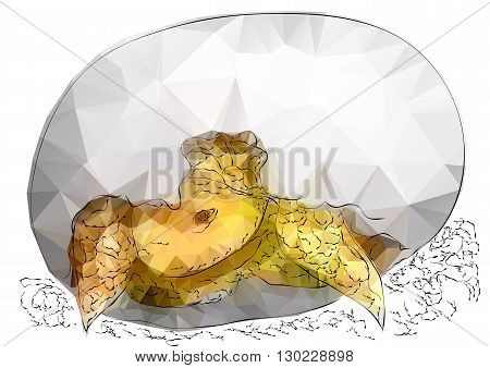 tortoise in egg isolated on white background