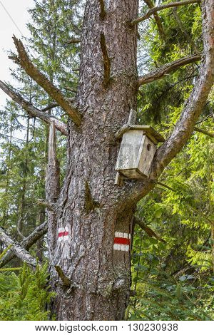 Bird feeder near the red trail to the top of Radziejowa Mountain, Poland