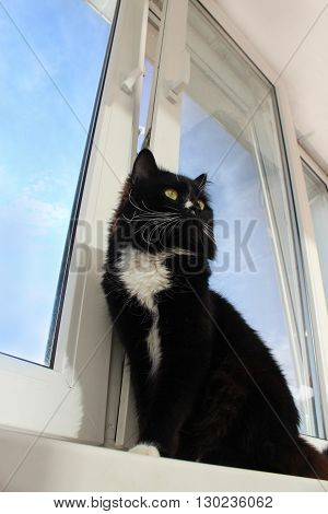 black cat walking on the window-sill with beautiful orchid