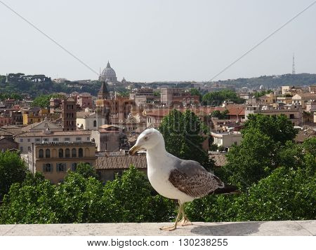 Seagull on parapet, view of the Cathedral of St. Peter in Rome