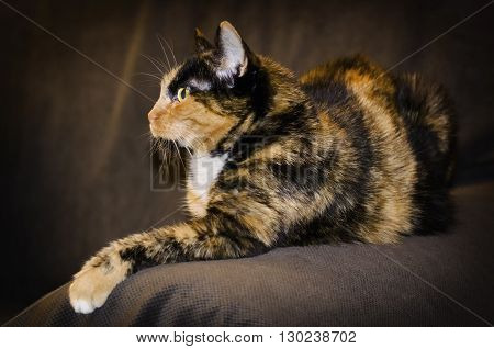 Photo of Pretty Single Cat at Rest