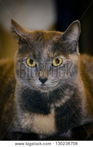 Photo of Pretty Single Grey Cat With Green eyes