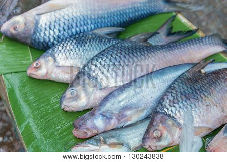 Fresh Fish For Shop In A Market