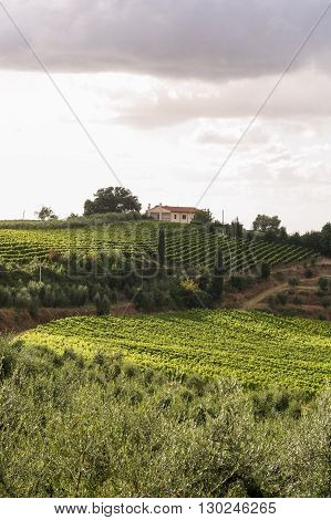 Summer Tuscan green hills with vineyards. On the horizon - the house among trees