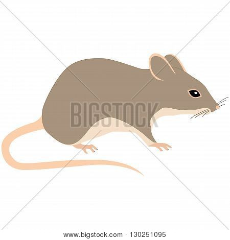 illustration brown mouse on a white background