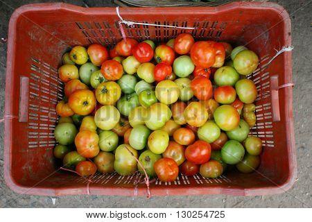 Tomato-Pile Of Tomato / Tomato in Plastic Basket .