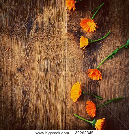 Pot Marigolds or English Marigolds (Calendula officinalis), fresh blossoms on wooden background