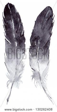 Watercolor black and white feather pair set isolated