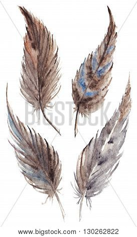 Watercolor brown gray grey feather set isolated