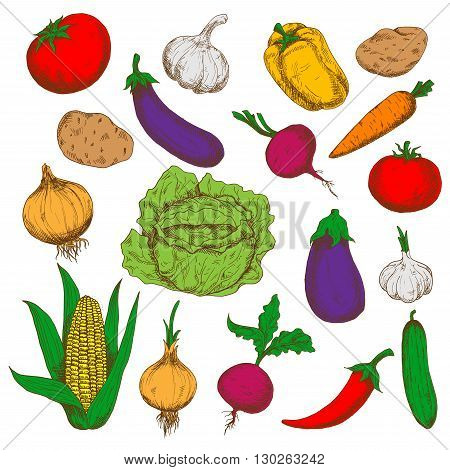 Farm grown fresh green cabbage and cucumber, ripe potatoes, beetroots and eggplants, red tomatoes and cayenne pepper, sweet corn, carrot and bell pepper, pungent garlics and onions vegetables. Healthy food and agriculture design usage