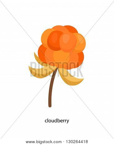 Nice little yellow cloudberry with its leaf