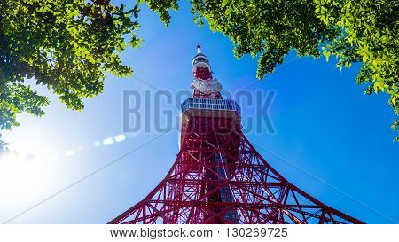 Tokyo Tower In Summer And A Green Tree On May 13,2016 In Tokyo,japan