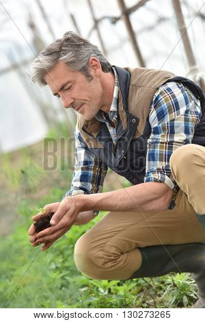 Farmer using loam to plant new seeds