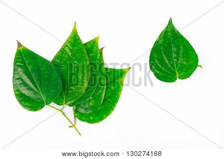 betel leaf is herbal plant on white background isolated