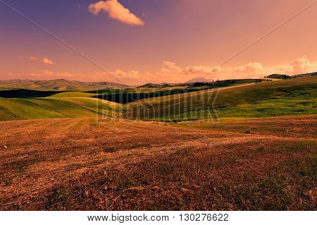 Wheat Fields on the Hills of Sicily at Sunset