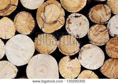 Tree stumps background. Wood background. Wooden texture.