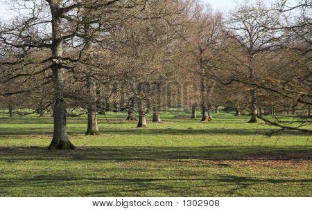 Árvores de Carvalho