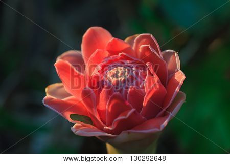 Abstract Flower With Sunray