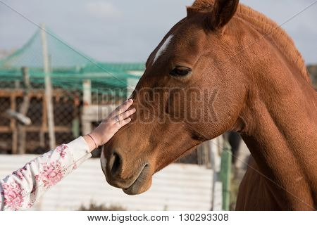 girl hand caressing horse detail close up