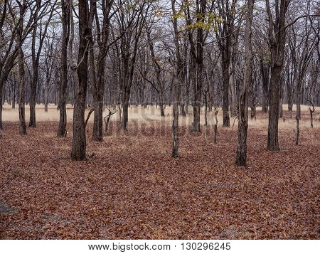 a forest in the African savanna Malawi