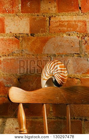 nautilus sea shell in retro style,  vintage chair with old brick wall, shallow dof