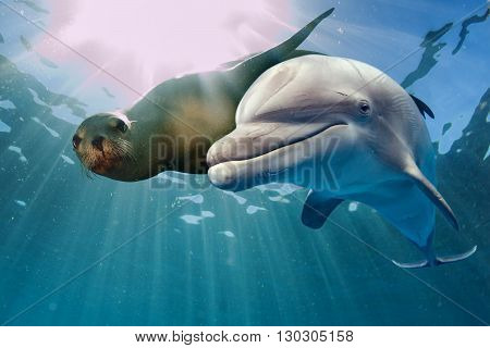 Dolphin Fish Images, Stock Photos & Illustrations | Bigstock
