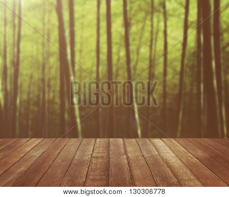 Wooden Floor Bamboo Forest Shoot Serenity Nature Concept