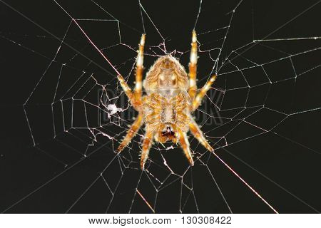 A Spider Hanging In Its Web Net