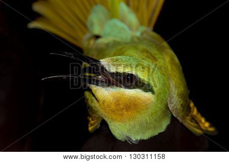 A Bee Eater Portrait On The Black Background