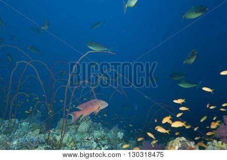 Underwater Landscape Of Red Sea