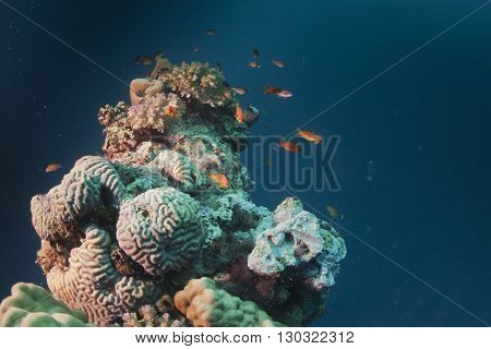 Coral Reef of red sea close up detail pano