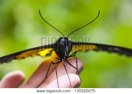 Close up of beautiful butterfly on human hand