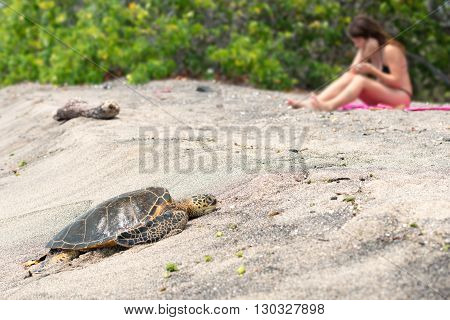 Green Turtle At Kahaluu Beach Park