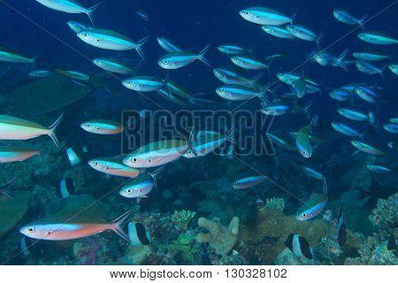 Inside A School Of Fish