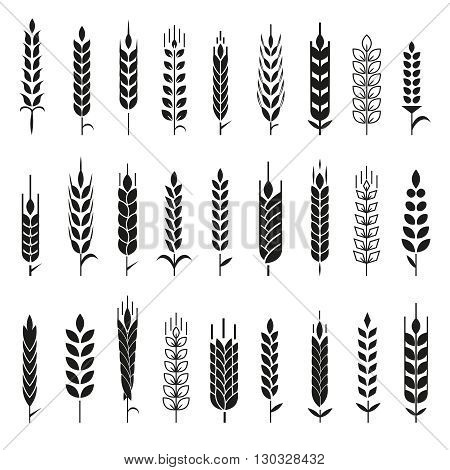 Wheat Ears Icons and Logo Set. For Identity Style of Natural Product Company and Farm Company. Organic wheat, bread agriculture and natural eat. Contour lines. Flat design. Realistic image. Vector