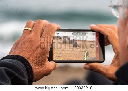 Photographer Taking Picture Of Sea Lion