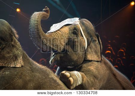 Elephant Exhibition At The Circus