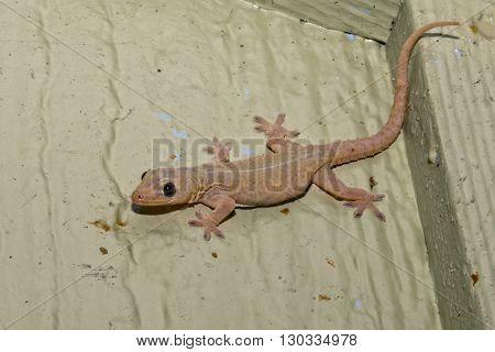 gecko portrait close up macro close up