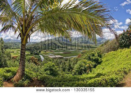 Hawaii Kauai Fields On Sunny Day
