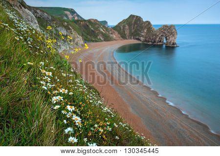 Daisy flowers at the beach on the Jurassic Coast of Dorset, UK