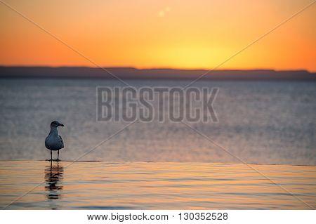 Seagull On Sandy Beach At Sunset